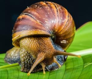 snail-424133_1920